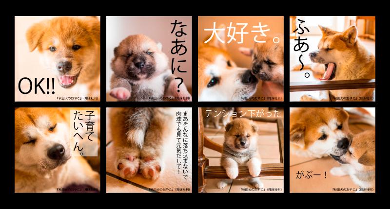 秋田犬の親子 会員特典