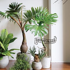 Part01では、人気植物ショップAYANASの境野さんはじめ、さまざまな方に植物の飾り方、楽しみ方をお聞きしました。