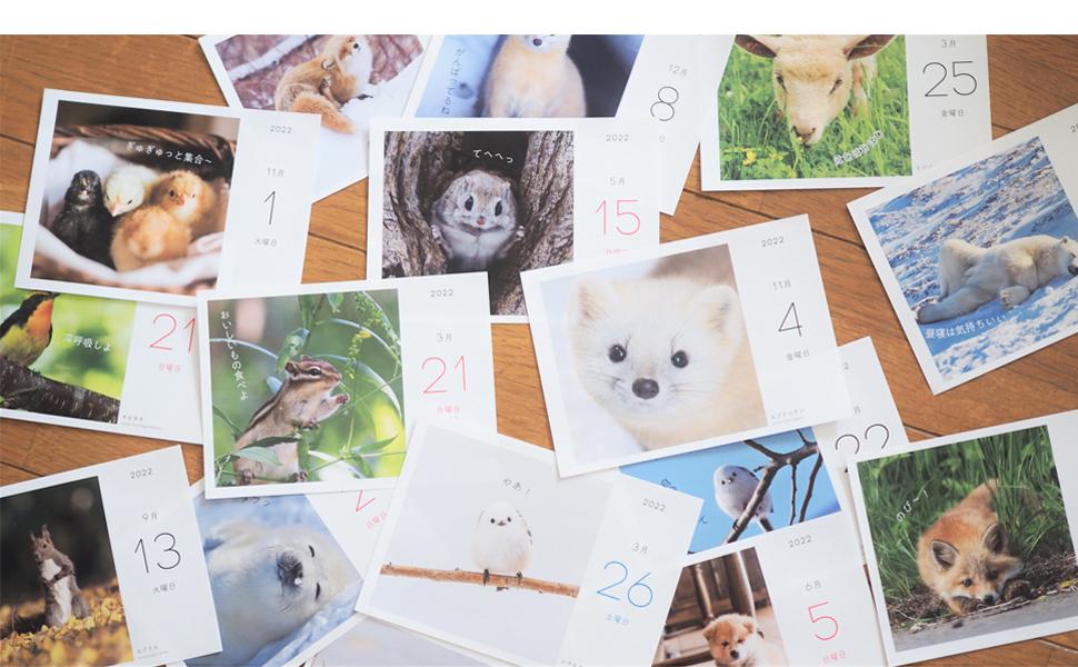 もこもこふわふわな 野生動物写真が大集合